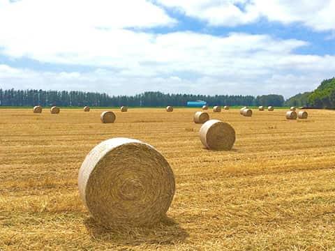更別村の麦わらロール